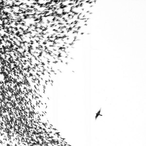 Hate It Here – Wilco